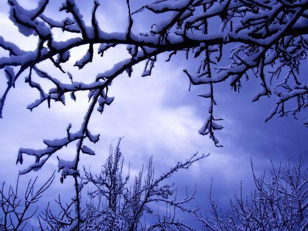 Снег и Черешня