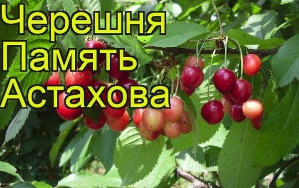 Памяти Астахова