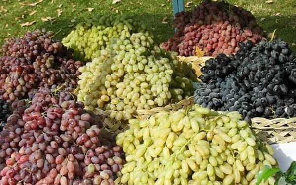виноград крымский