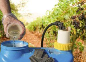 Инструкция по применению коллоидной серы для обработки винограда