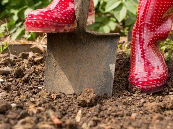 Коррекция почвы