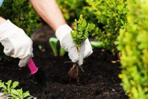 Лунно-посевной календарь посадок садовода на июль 2020