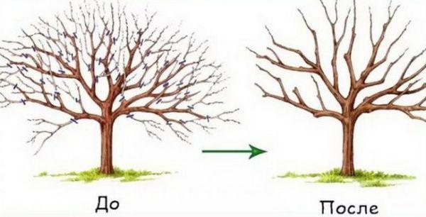 до и после обрезки