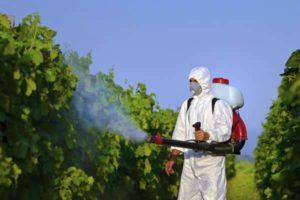 Чем обработать виноград после дождя в июле, препараты и народные средства
