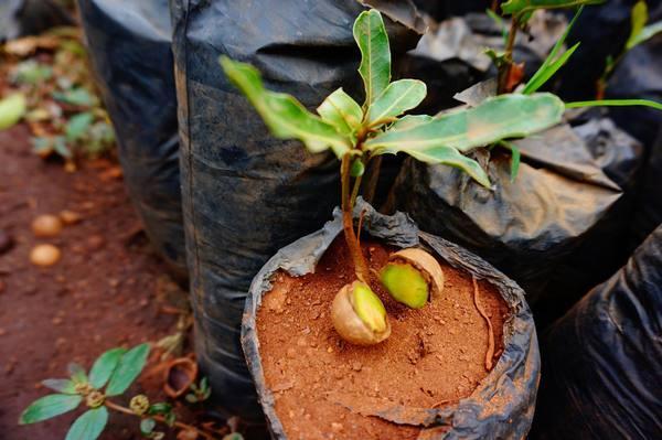 размножение семян