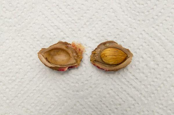 косточка персика