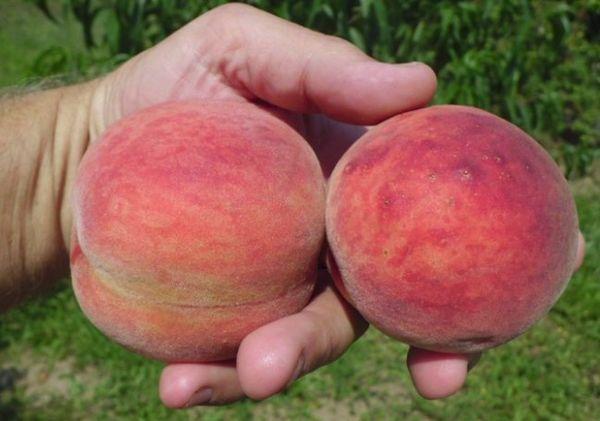 два персика