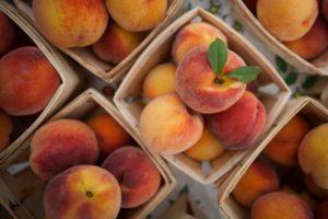 Польза и вред персиков для здоровья, противопоказания для организма