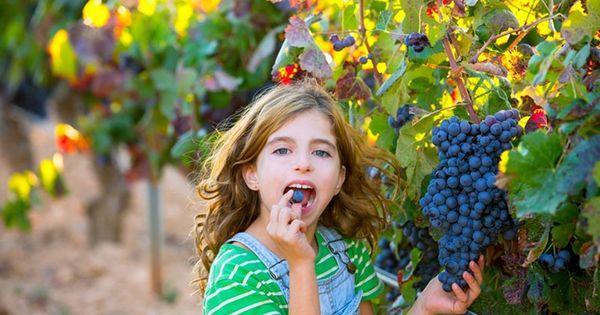 ест виноград