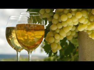Описание и характеристика винограда сорта Тасон, технология посадки и уход