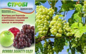 Инструкция по применению препарата Строби для обработки винограда