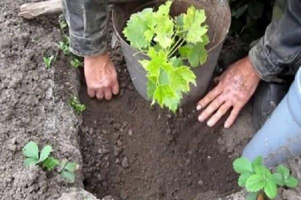выравнивать почву
