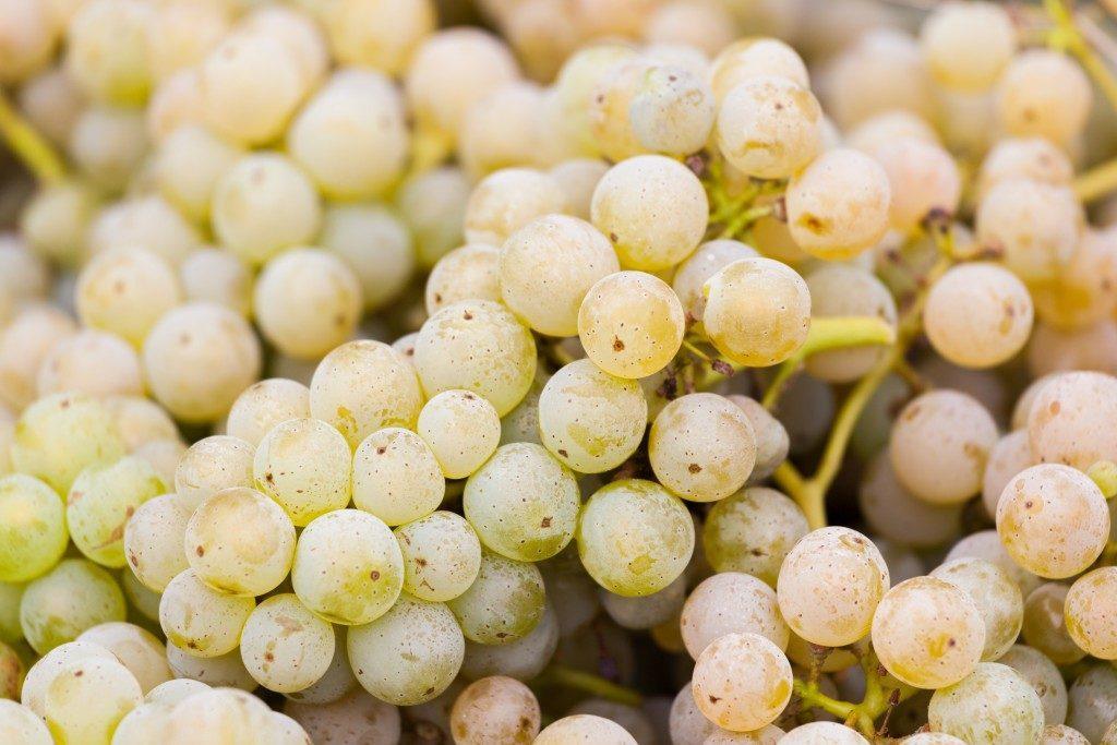 виноград спелый