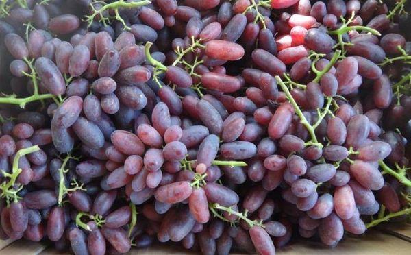 Виноград ягоды