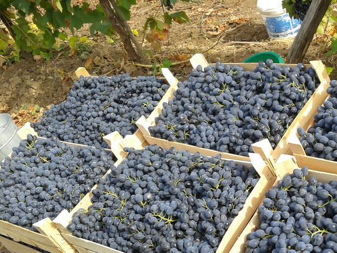 перевозка и хранение винограда