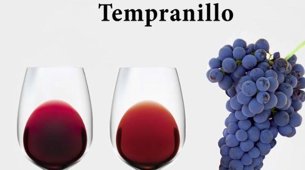 виноград в виноделии