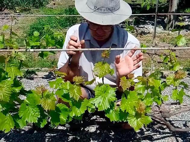 выращивание и прореживание