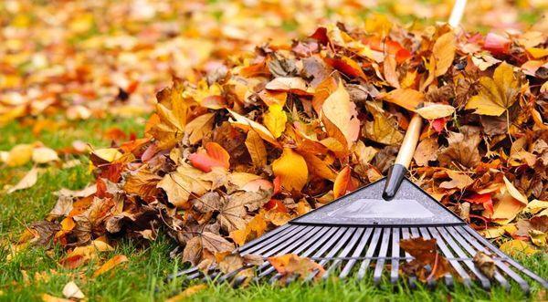 Уничтожение прошлогодней листвы