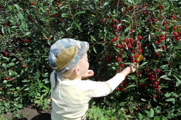 малыш у урожая