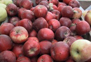 Описание сорта яблок Джонатан и технология выращивания