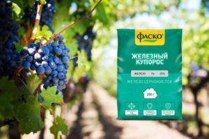 Инструкция по применению железного купороса для обработки винограда