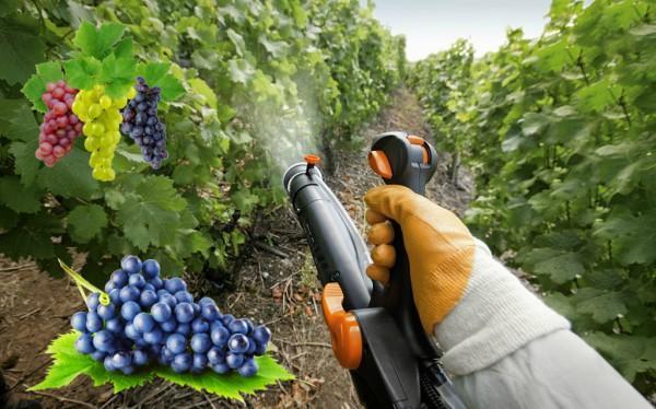 виноград весенняя обработка