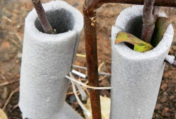 защита дерева