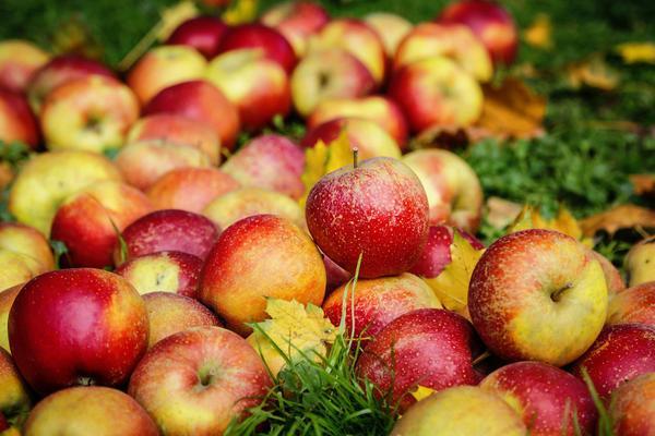 сладкие яблони
