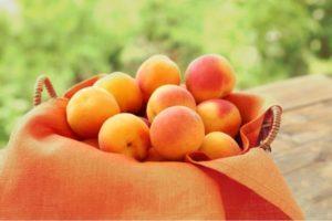 Описание и выращивание абрикоса сорта Жигулевский сувенир