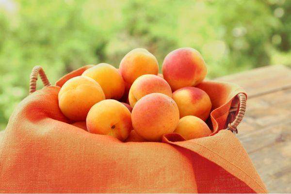 миска с абрикосами