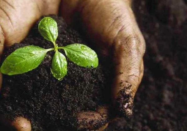 росток в земле