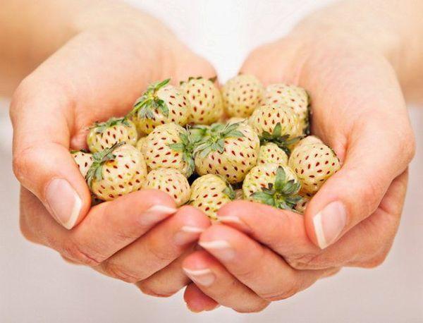 гибридные ягоды