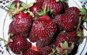 Описание клубники сорта Рубиновый кулон и правила выращивания