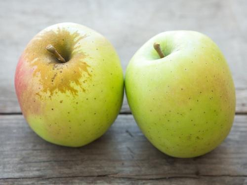 внешний вид яблони муцу