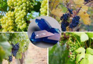 Как приготовить раствор для обработки винограда медным купоросом летом, инструкция по применению