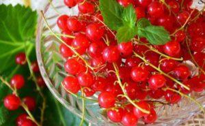 Описание красной смородины сорта Уральская красавица, посадка и уход