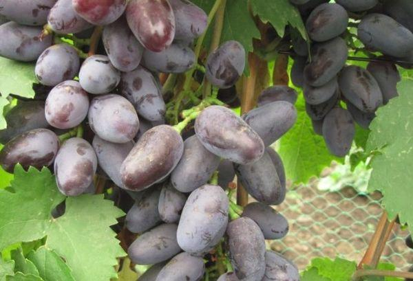плоды Байконура