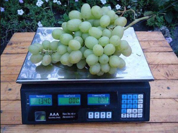 виноград на весах