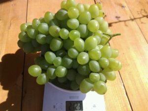 Описание и технология выращивания винограда сорта Супер Экстра