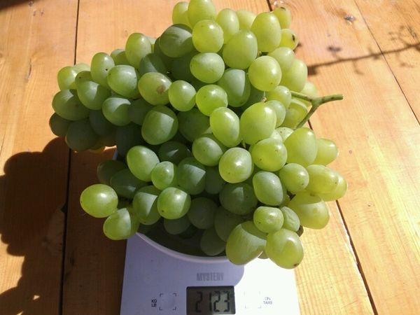 гибридный виноград