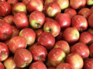 Описание и характеристики яблок сорта Айдаред, тонкости выращивания