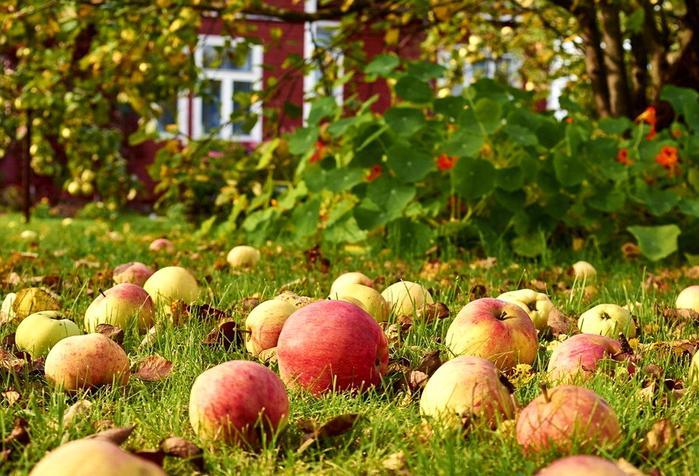 яблони на траве