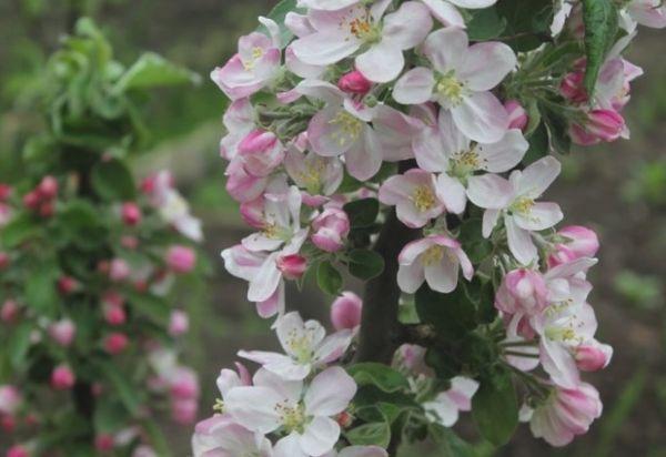 Цветение и опылители