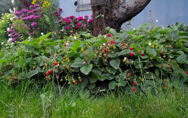 Цветение и опыление