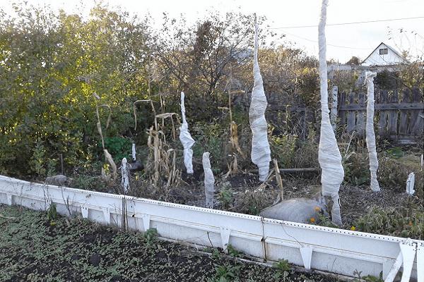 Укрытие яблони на зиму