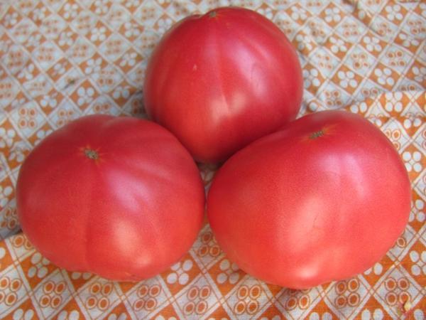 помидоры бабушкин секрет