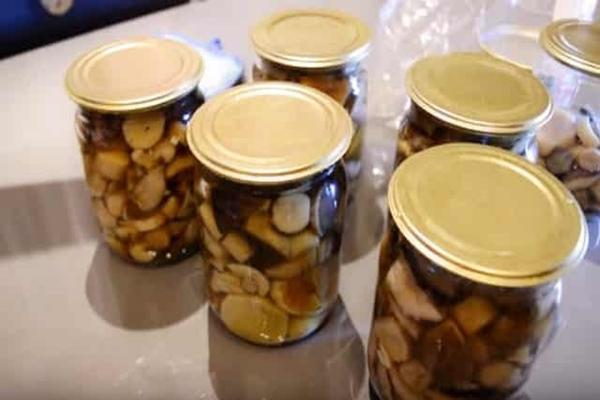 Для пластинчатых грибов