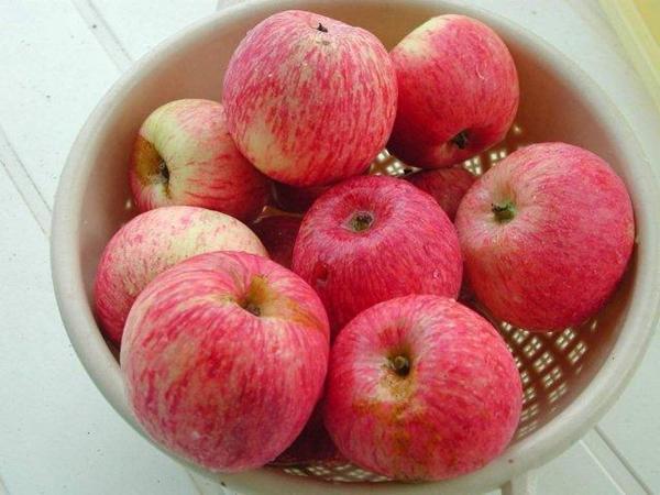Розовое превосходное яблоня Боровинка