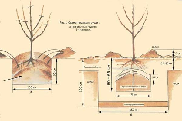 Схемы и правила высадки деревца