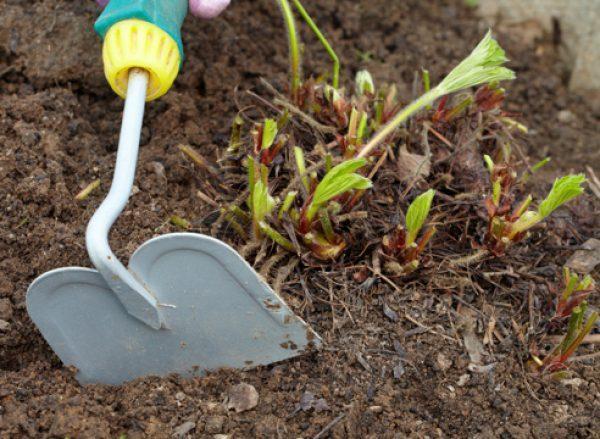 рыхление почвы под клубнику